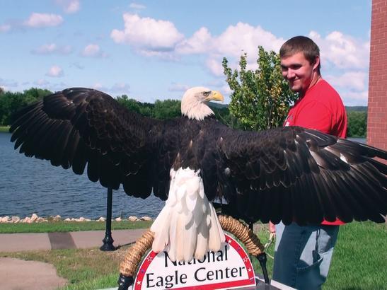 Angel the Eagle | credit National Eagle Center