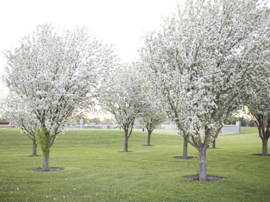 Blossom Trees | credit AB-PHOTOGRAPHY.US