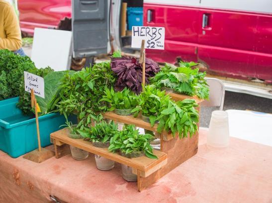 A variety of herbs   credit choochoo-ca-chew