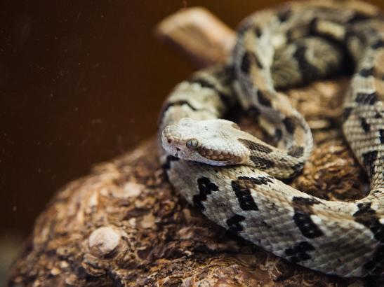 Snake   credit AB-PHOTOGRAPHY.US