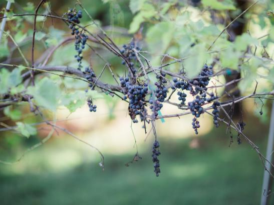 Salem Glen Winery   credit AB-PHOTOGRAPHY.US