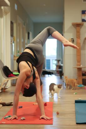 Yoga pose with cats