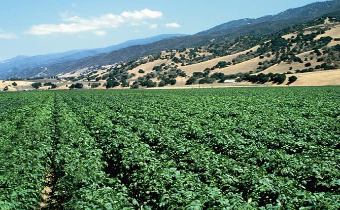 Salinas Valley crops