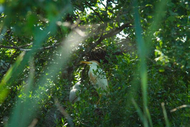 Eco tour through Creole Nature Trail | Birding
