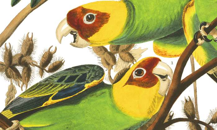 Founding Feathers: Extinction and Conservation of Southern Birds