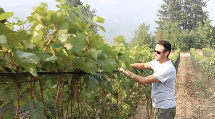 Winemaker at Rollingdale