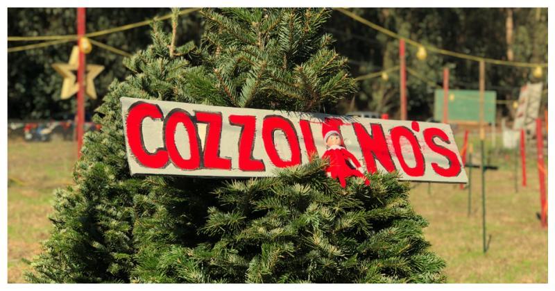 Elf at Cozzolino