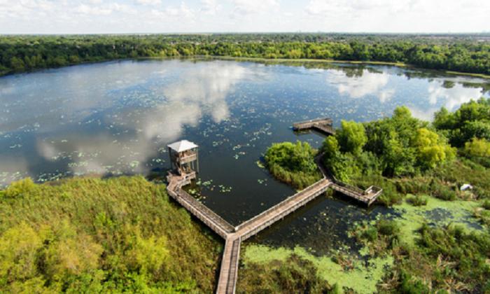 Beaumont Swamps