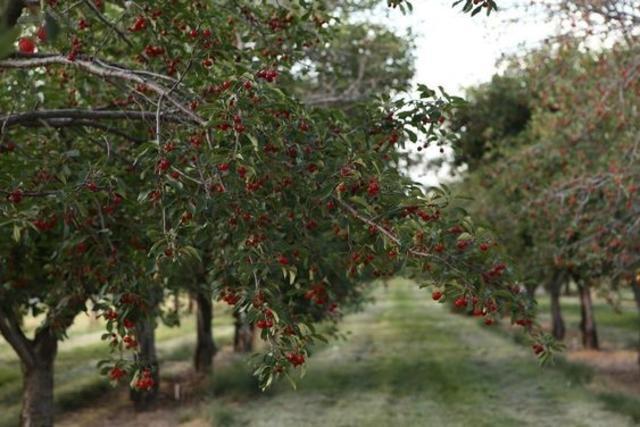 South-Ridge-Farms-Santaquin