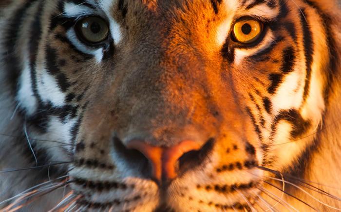 Nemacolin Woodlands Resort's Wildlife Kingdom