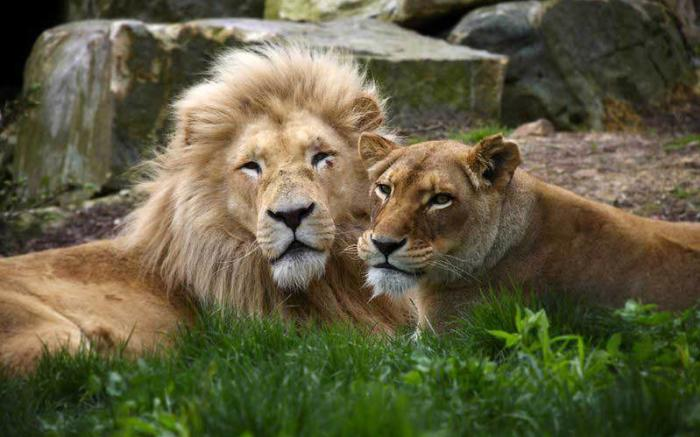 Wildlife Academy - Nemacolin Woodlands Resort