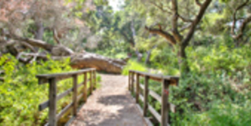 Los Osos Oaks State Reserve