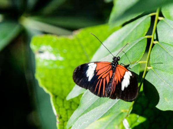 Magic Wings Butterfly House - Butterfly
