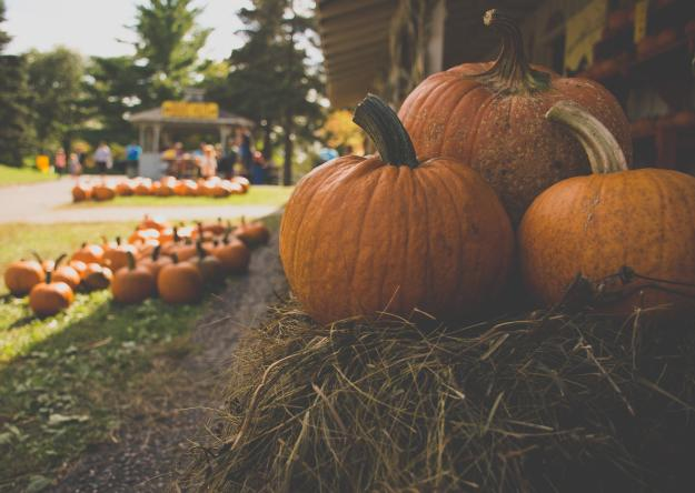 Pumpkin Patch | Kid Halloween Events