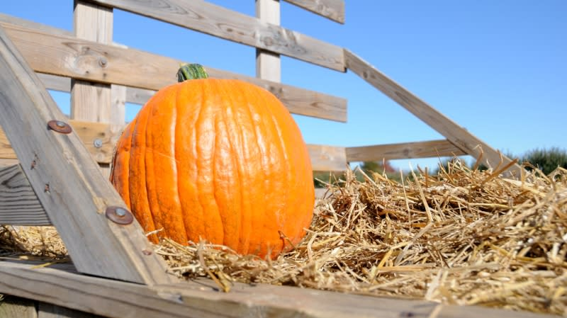 Pumpkin Patch & Hayride