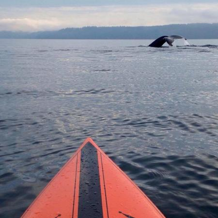 Visit with a Humpback at Dalco Passage in October. Tacoma, Washington. Credit: Dean Burke