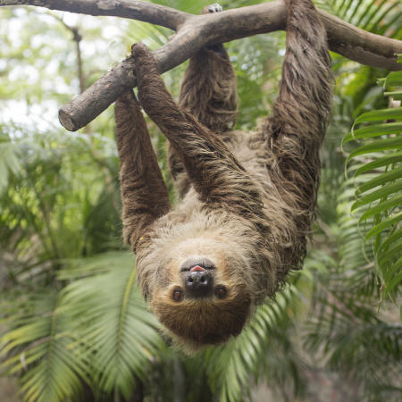 RWP Zoo Sloth