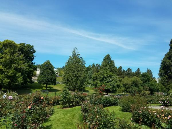 Point Defiance Park Rose Garden