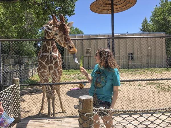 Teenager feeding a giraffe lettuce at Lee Richardson Zoo