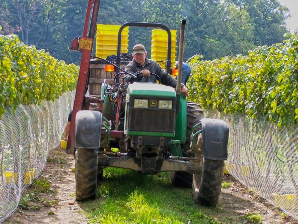 Harvest at Treleaven