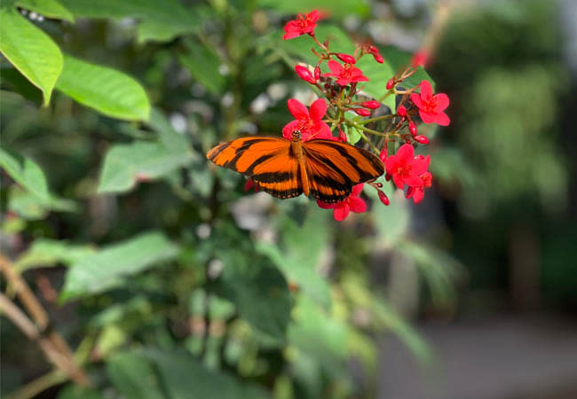 Secrects of Thanksgiving Point That Will Make you Want to Visit ASAP - Butterflies