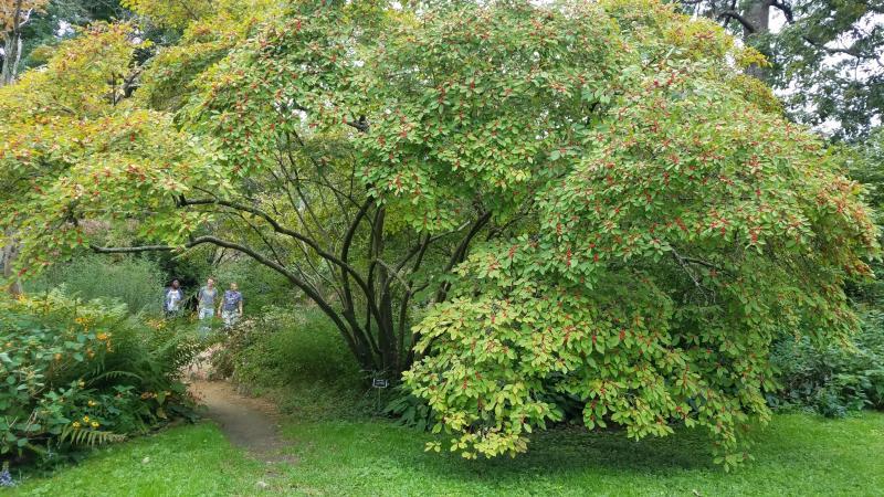 Copy of Coker Arboretum