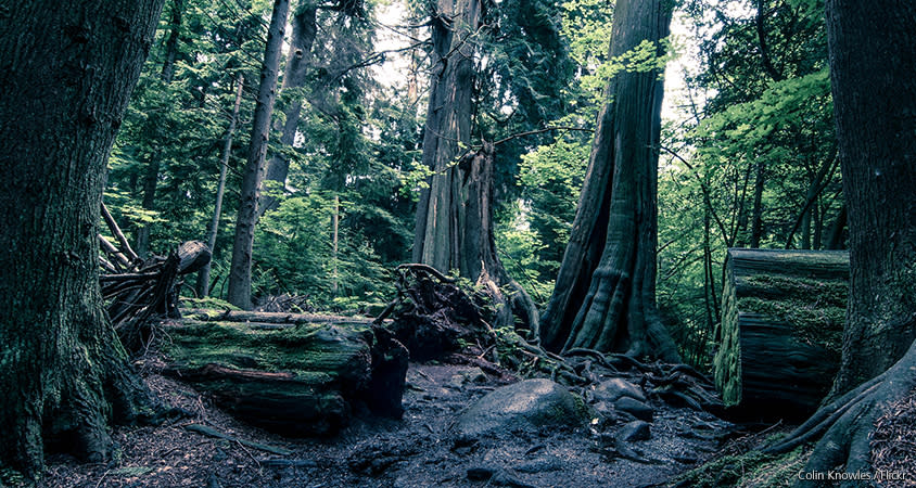 Stanley Park Forest