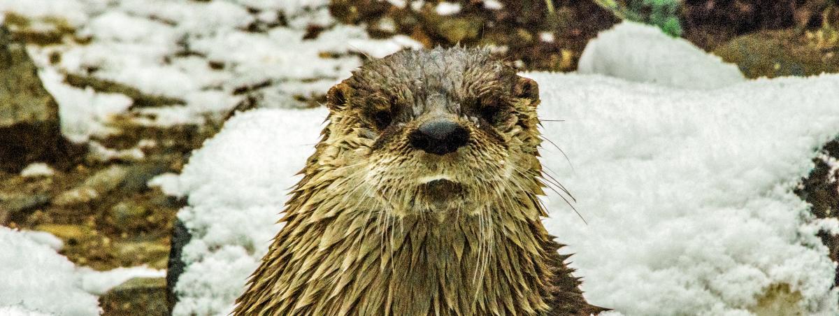 zooamerica-winter-hersheypark
