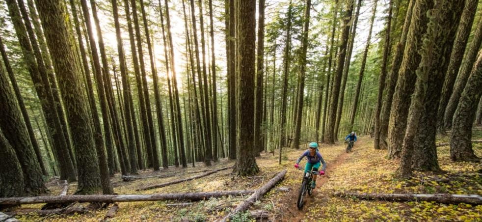 Mountain Biking Trails Eugene Cascades Oregon Coast