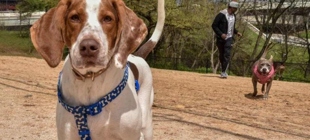 Holston River Dog Park