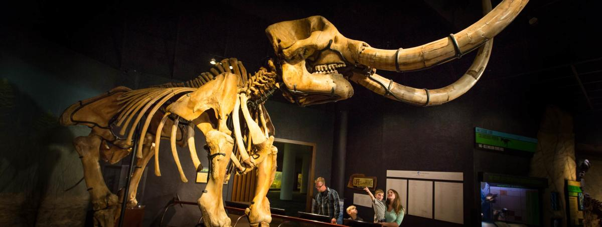 state-museum-pa-mastodon