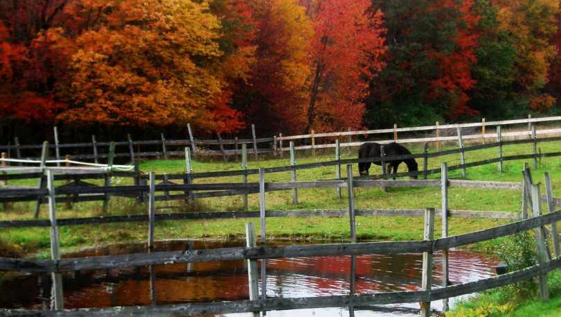 Grace Note Farm
