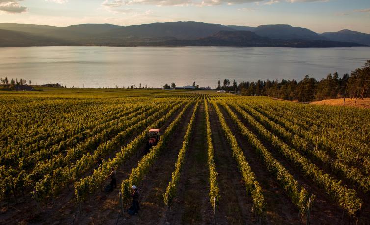 CedarCreek Estate Winery