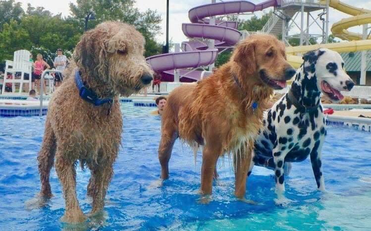 Mako and friends at Liberty Lagoon