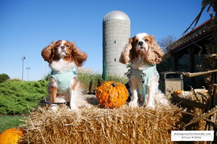 Dogs outdoors at Fair Oaks Farms
