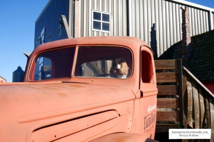 Dogs in truck at Fair Oaks Farms
