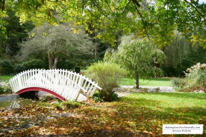 Friendship Botanic Gardens bridge