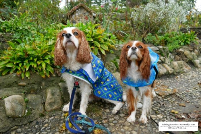 Dog-Friendly Indiana Attractions