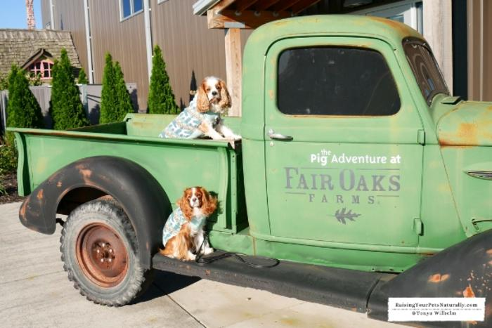 Dogs on Fair Oaks Farms truck