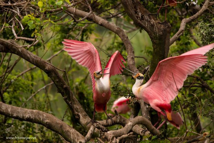 Birds in Port Arthur