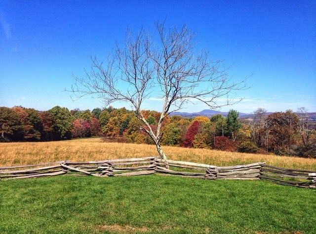 Blue Ridge Parkway Meadow - Fall Photo