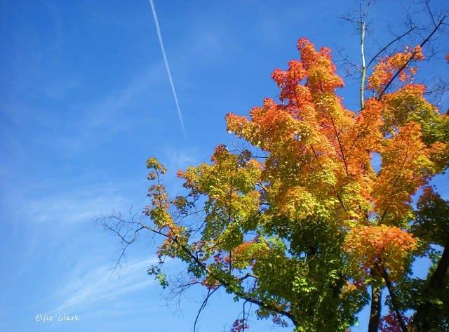 Fall Rainbow Tree - Fall Photo