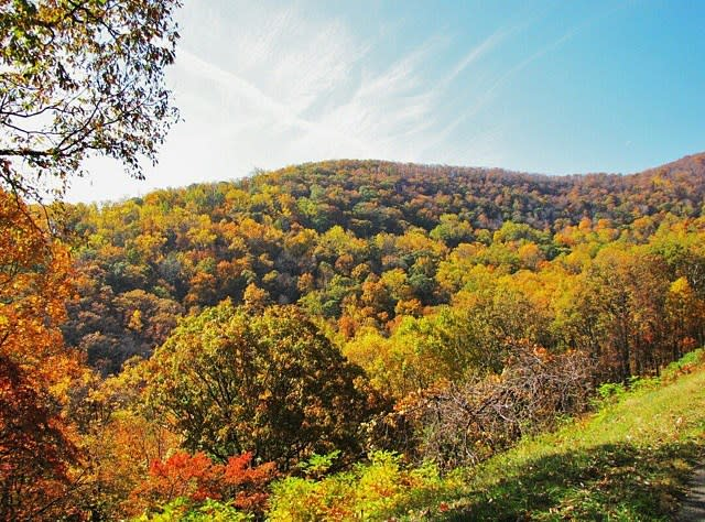 Fall Colors Horizon - Fall Photo