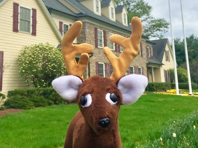 """""""Bucky"""" at the Bucks County Visitor Center"""
