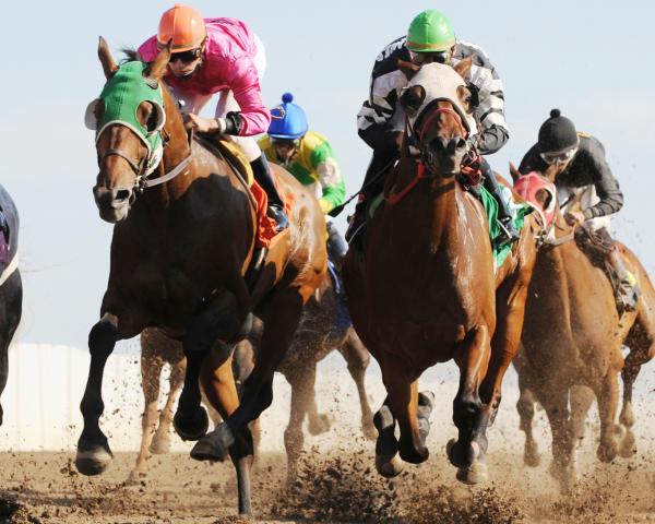 Racing at Prairie Meadows