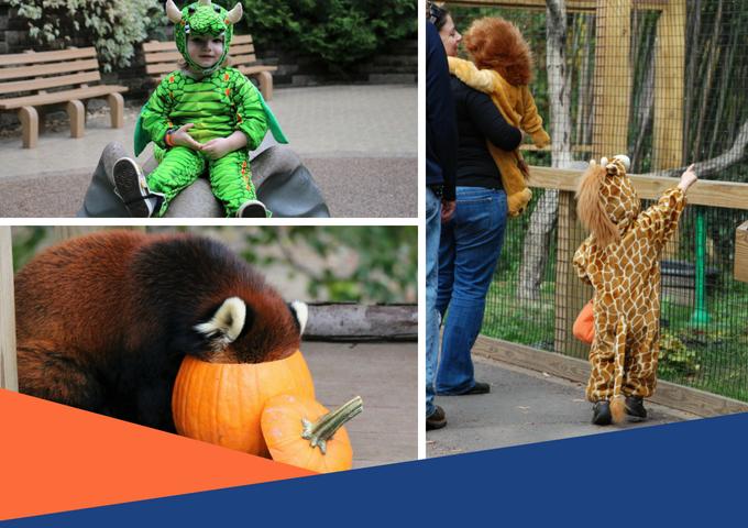 Spooky Zoo