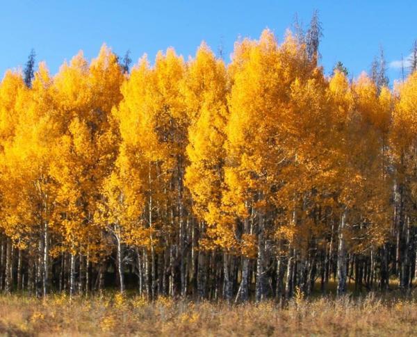 Fall Trees 2