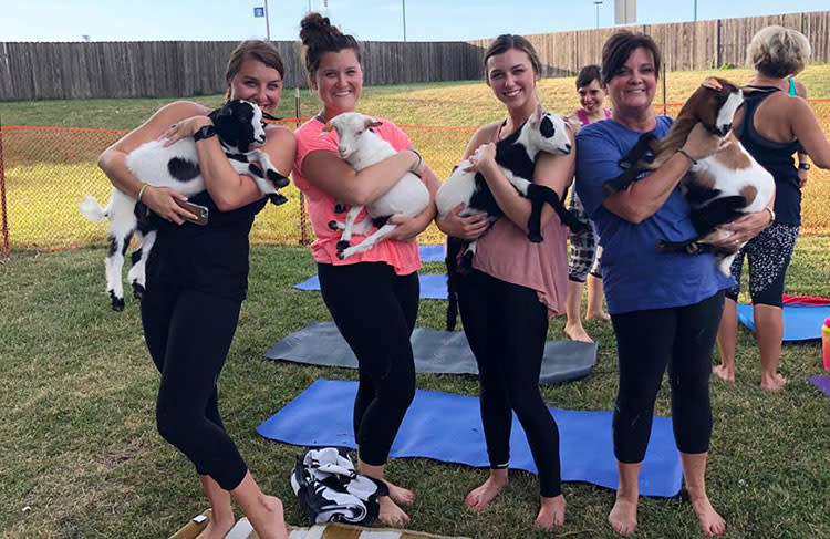 Take a Midwest Trip for Goat Yoga in Overland Park