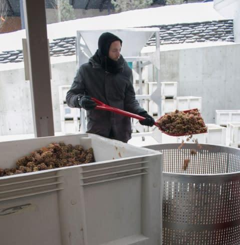 Riesling Ice Wine at CedarCreek