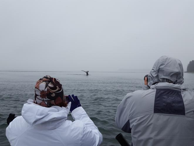 Private Whale Watching trip